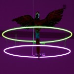 Jewels of Aptor IIPiercing Brightness_Harris Museum 2011 Simon Critchley 9 low